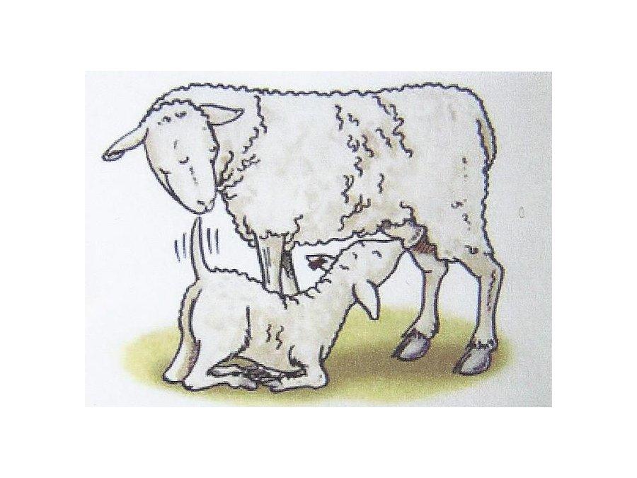 L'agneau de Pâques, l'agneau Pascal